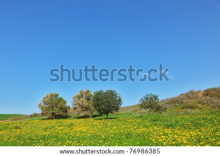 Early spring in fields in southern Israel. Soft green grass, blooming daisies and clear air
