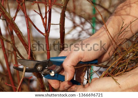 Early spring work in the garden - pruning shrubs. A pruning shears in the gardener's hand.
