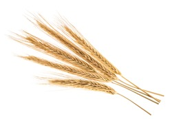 Ears of rye isolated on a white without shadow