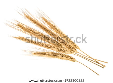 Ears of rye isolated on a white without shadow Сток-фото ©