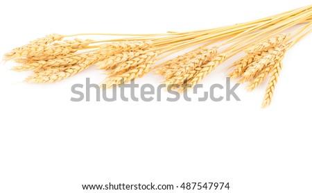 Ears of wheat #487547974