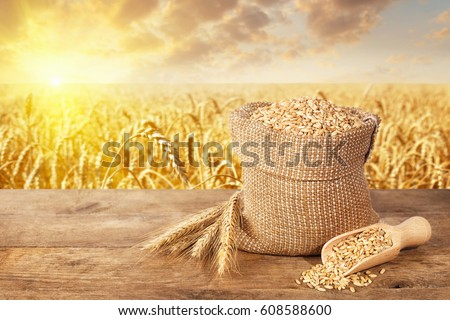 ears of wheat and grains in sack on table with ripe cereal field on the background
