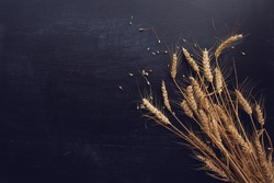 Ears of wheat and grains on dark wooden background