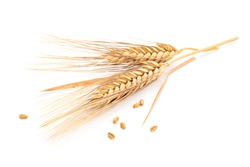 Ears of wheat and seeds isolated on white background.