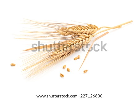 Ears of wheat and seeds isolated on white background. #227126800