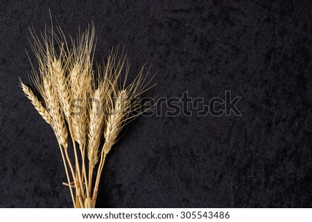 Ears of wheat on black cloth background