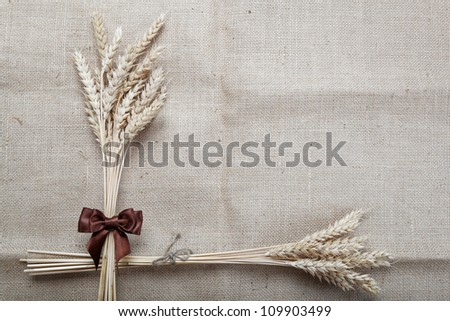Ears of wheat on the canvas.