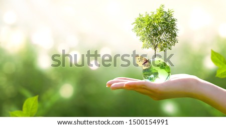 Earth crystal glass globe ball and growing tree in human hand, flying yellow butterfly on green sunny background. Saving environment, save clean planet, ecology concept. Card for World Earth Day.