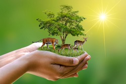 Earth Day Concept Nature reserve conserve Wildlife reserve tiger Deer Global warming Loaf Ecology Human hands protecting the wild and wild animals tigers deer, trees in the hands green background Sun