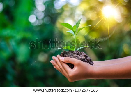 Earth Day In the hands of trees growing seedlings. Bokeh green Background Female hand holding tree on nature field grass Forest conservation concept #1072577165