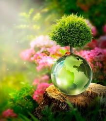 Earth Day or World Environment Day concept. Save our Planet, restore and protect Green Nature, sustainable lifestyle and Climate literacy theme. Globe, ladybug and growing Tree on stump in forest.