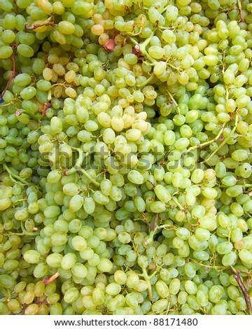 earth treasures, green grapes
