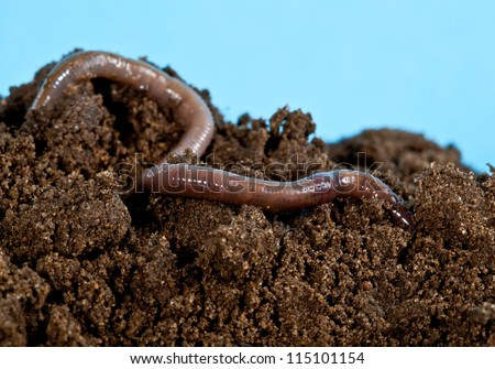 Earthworm in a heap of soil - stock photo