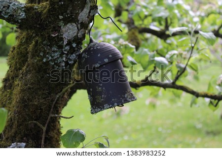 earwig house on a pear tree