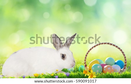 Easter background. Cute Little bunny and Easter eggs on green grass  #590091017