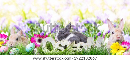 Easter bunnies on the meadow with Easter eggs in the tall grass  with wooden,rustic lettering-ostern-german word. Stock foto ©