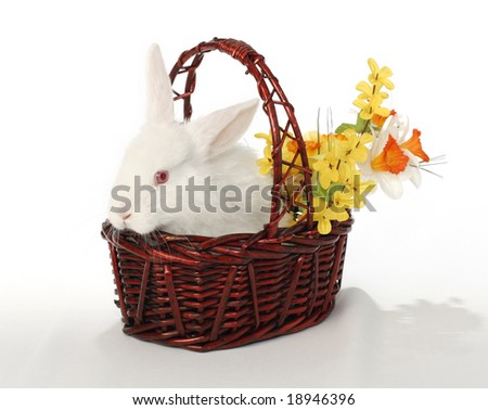 Easter bunny, albino rabbit in basket