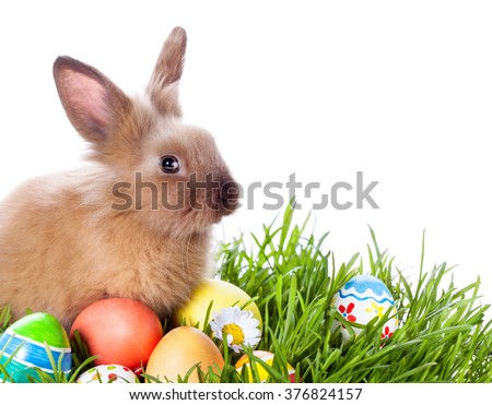Easter bunny and Easter eggs on green grass  #376824157