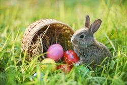 Easter bunny and Easter eggs on green grass field spring meadow