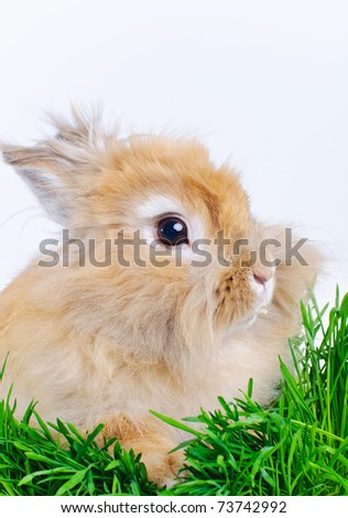 Easter Bunny. Cute rabbit sitting on green grass. - stock photo