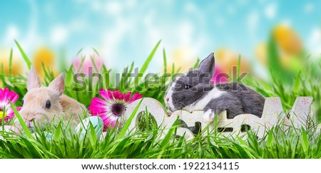 Easter bunny family on the green meadow in summer with blue beautiful sky and field of tulips and rustic wooden german word-ostern. Stock foto ©