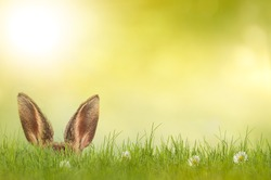 Easter bunny hiding in meadow
