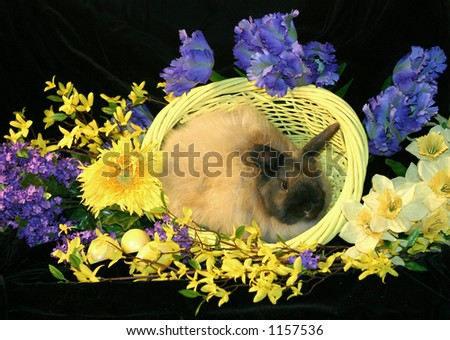 Easter bunny in basket surrounded by spring flowers.  Horizontal presentation.