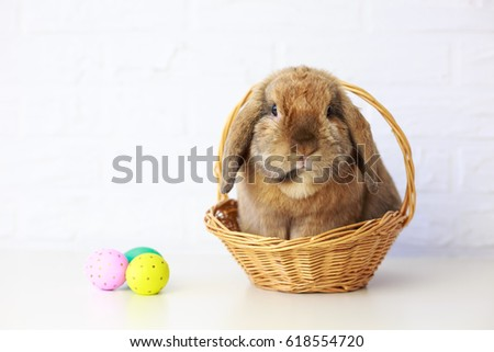 Easter Bunny in Basket with Easter Eggs. White Brick Wall Background. Shallow Depth of Field. Fluffy Brown Lop-Eared Rabbit. Copy Space. #618554720