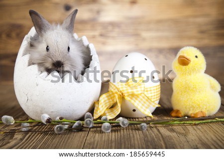 Easter bunny in the egg, duck Easter, based Zdjęcia stock ©