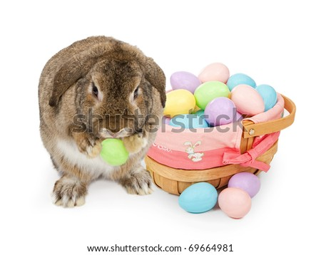 easter bunny pictures to print and color. and color easter Pictures