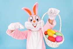 Easter bunny or rabbit or hare with basket of colored eggs, shows thumb finger up, having fun, dancing, celebrates Happy easter. Easter rabbit isolated on blue background