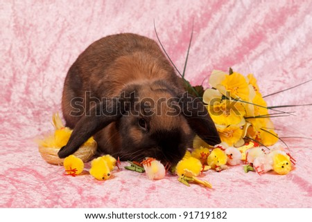 Easter bunny with chickens on pink background - stock photo