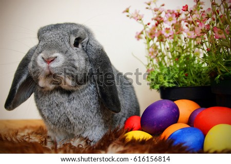 Easter bunny with Easter eggs and saxifrage #616156814
