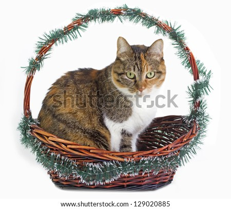 easter cat in a basket