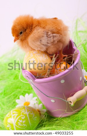 easter chick sitting in bucket