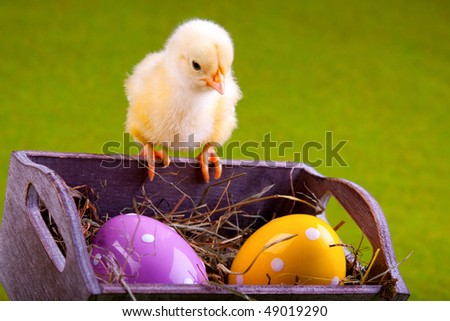 Easter chick sitting on basket with painted eggs