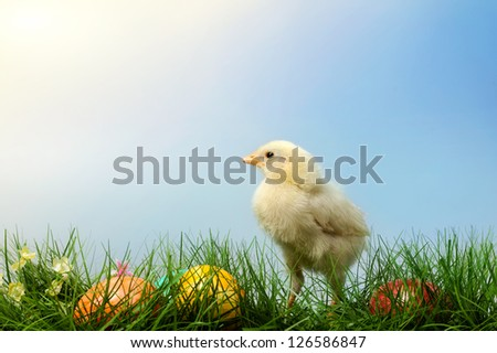 Easter chick with colorful painted Easter egg, on blue sky background