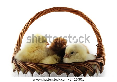 Easter chicken and Easter egg - stock photo