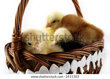 Easter chicken and Easter egg