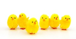 easter chicken decorations isolated on white background