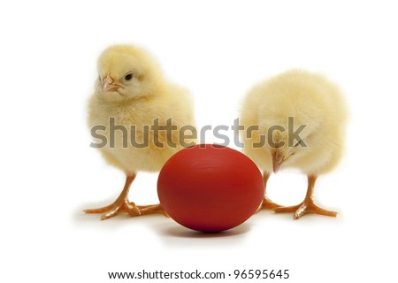 easter chicken with red eggon white background