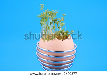Easter decoration egg with green cress on blue