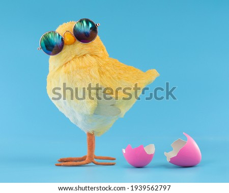 Easter decoration of a yellow chick wearing silly sunglasses with a pink cracked, hatched Easter egg. Stock photo ©