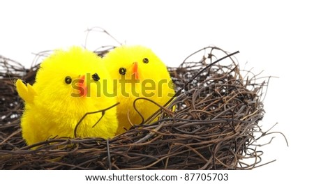 easter decoration, yellow chicks seated in a nest