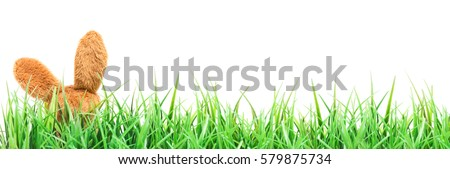 Easter, Easter Bunny has hidden in the grass #579875734