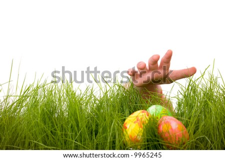 Easter egg hunt. Kids hand and easter eggs hidden in fresh green grass. Isolated on white background