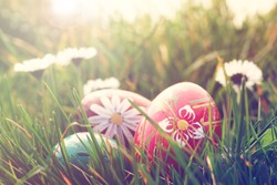 easter eggs and daisies in the grass