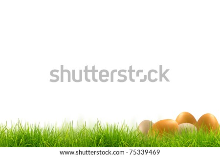 Easter eggs in Fresh spring green grass panorama isolated on white background.