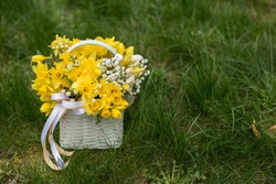 Easter flowers composition of  basket with yellow daffodils flowers. Bunch of yellow narcissus . Selective focus. Place for text. Copy spase
