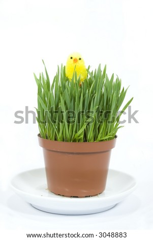 Easter grass in a pot with chick isolated on white